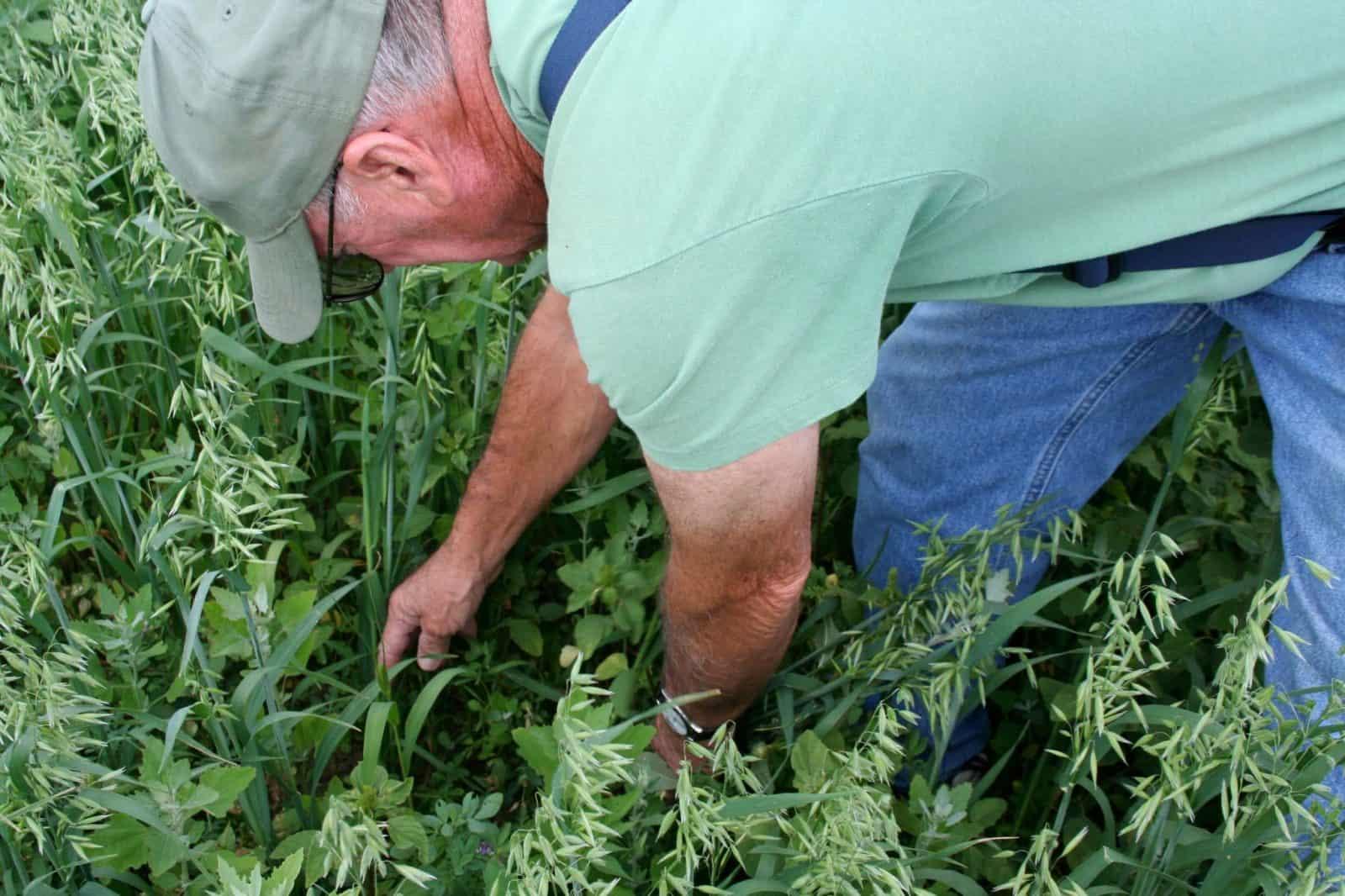dónde sembrar alfalfa