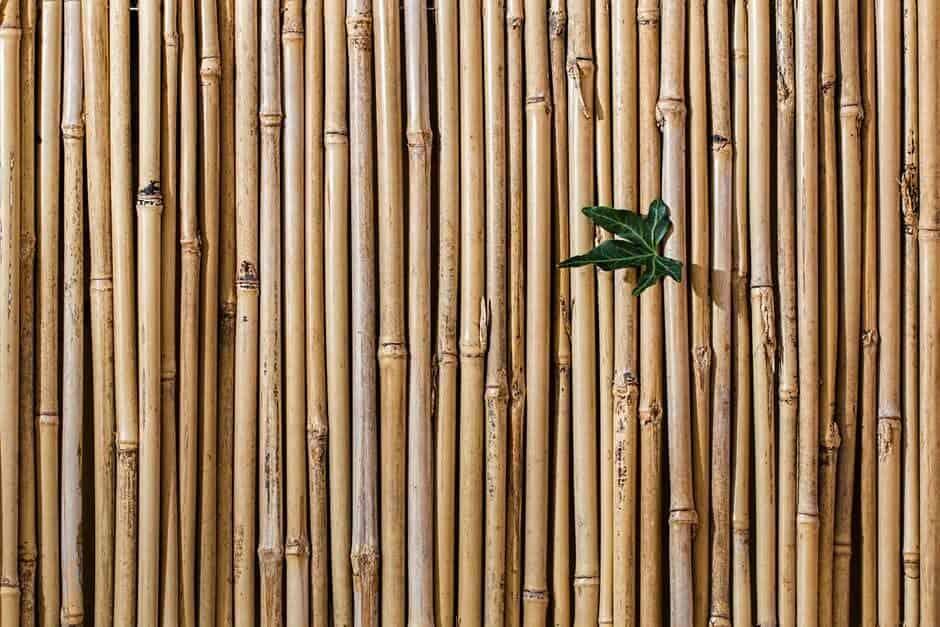 plantar bambú