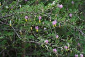 plantas invasoras 1