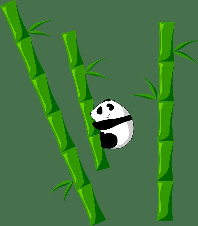 qué necesitas para sembrar bambú