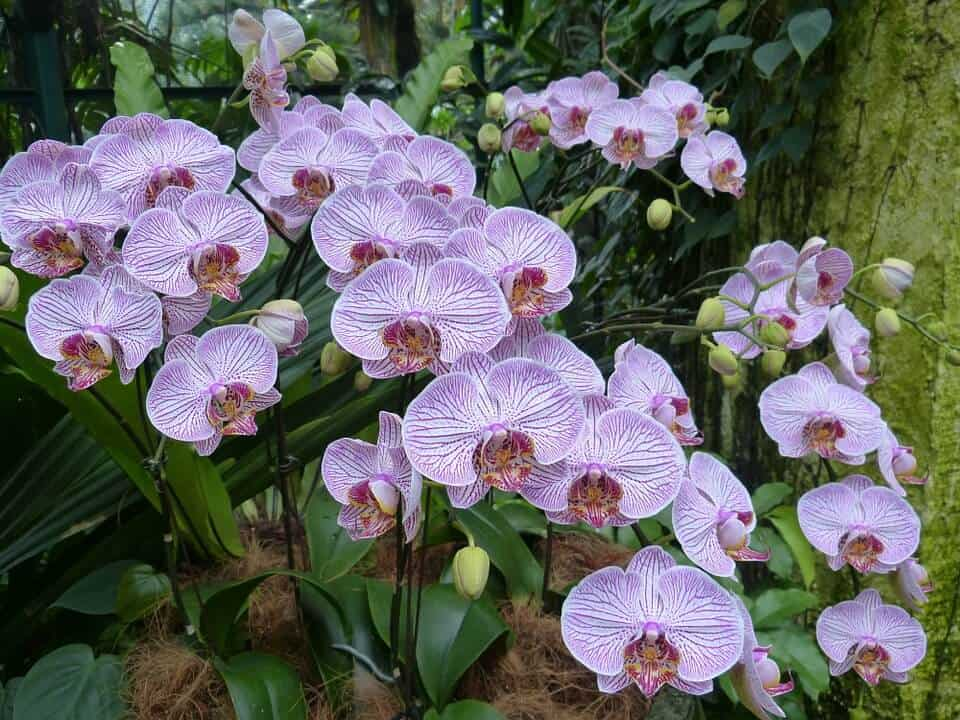 sembrar orquídeas en jardín
