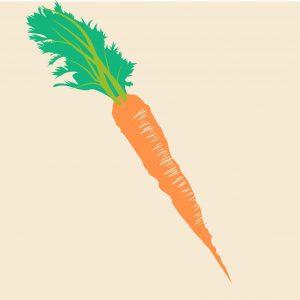 sembrar zanahorias 1