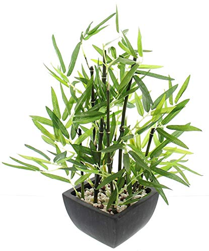 khevga - Planta de bambú decorativa en maceta