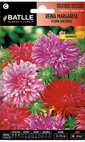 Semillas de Flores - Reina Margarita Pluma Avestruz - Batlle