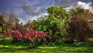 Dónde sembrar árbol del paraíso
