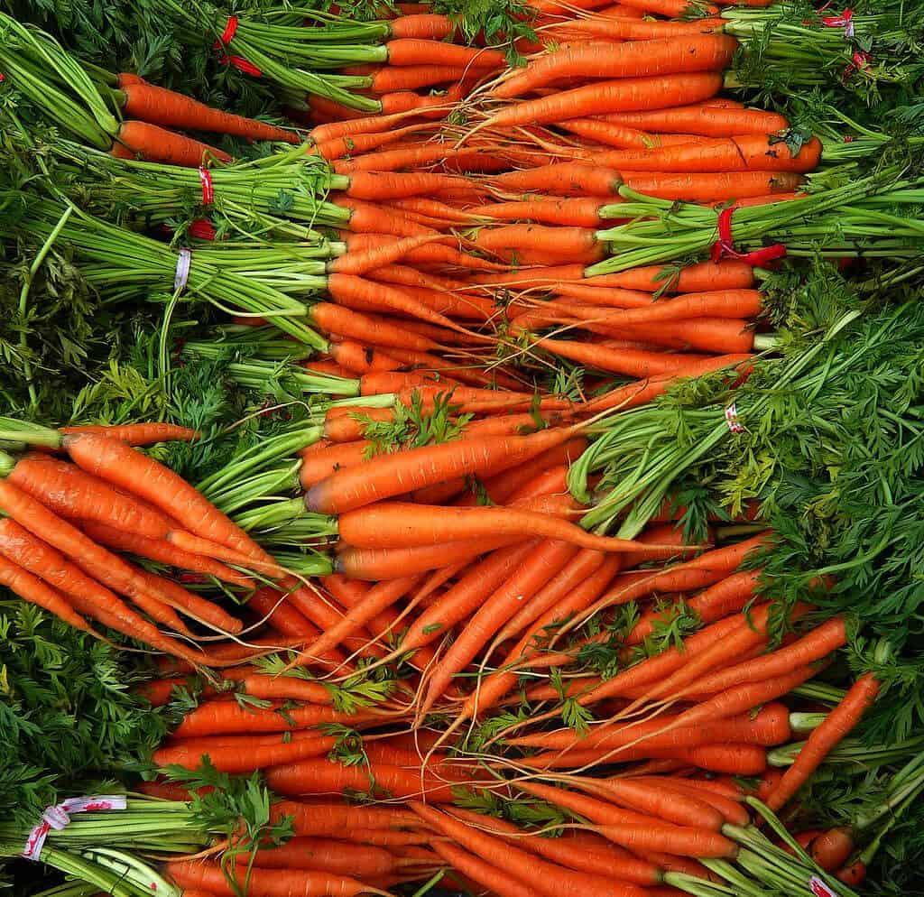 sembrar zanahorias 8