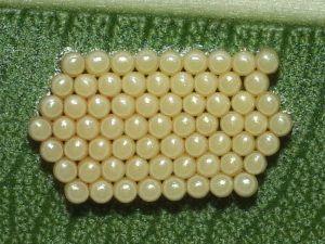chinche verde huevos
