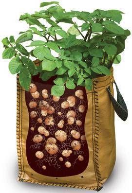 envases para patatas