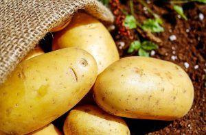 A qué plantas afecta el escarabajo de la patata - Patatas