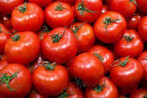 A qué plantas afecta el virus del bronceado - Tomates
