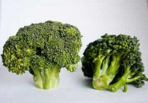 A qué plantas afectan las pulguillas de las crucíferas - Brócolis