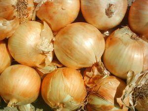 A qué plantas afectan los bibio o bibiones (bibio spp.) - Cebollas