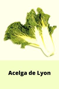 Acelga de Lyon (1)
