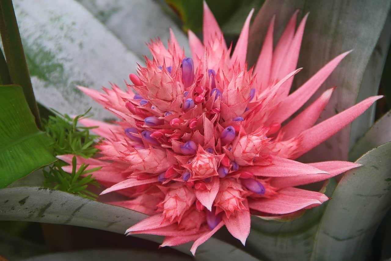 ¿Qué son las flores llamativas?