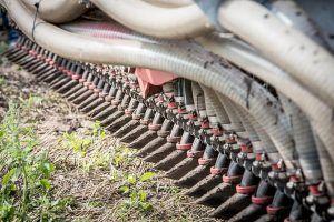 Cómo combatir el escarabajo de la patata - Rotación de cultivos