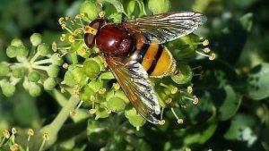 Cómo combatir la mosca de la col - Control biológico