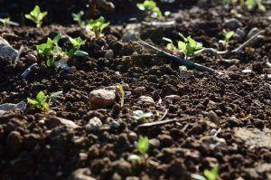 Cómo combatir el gusano blanco del suelo - Humedad del suelo