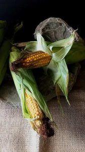 Cómo combatir el piral del maíz - Depredadores (Trichogramma brassicae)