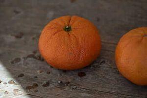 Cómo identificar y eliminar las enfermedades del mandarino - Mancha negra