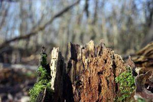 Cómo identificar y eliminar las enfermedades del naranjo - Podredumbre de las raíces