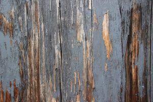 Cómo identificar y eliminar las enfermedades del pepino - Podredumbre gris