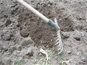 Cómo podemos combatir el minador de las cebollas - Limpieza del terreno