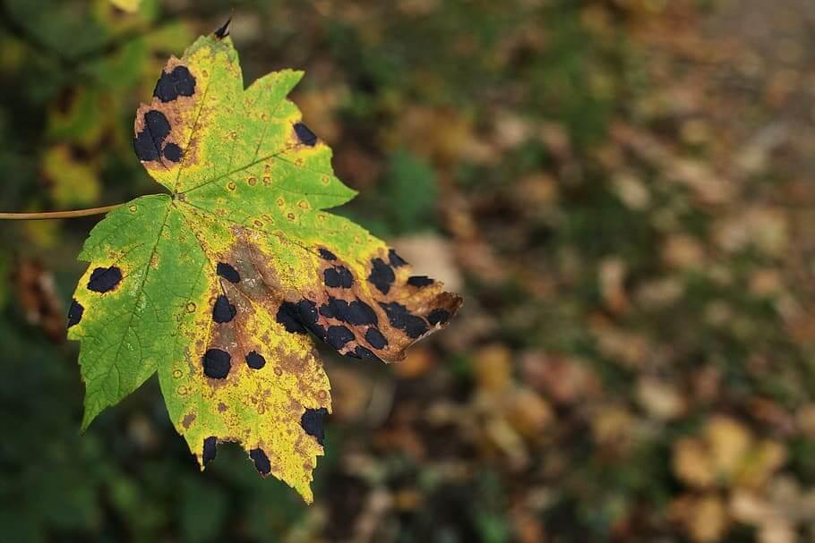 Cómo quitar las manchas marrones de las hojas de las plantas