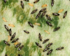 Cuáles son los mejores productos para eliminar el virus del bronceado