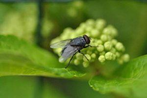 Cuáles son los mejores productos para eliminar la mosca de la col