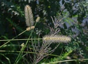 Cuándo sembrar las monocotiledoneas