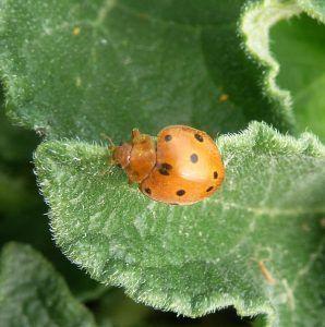 Cuáles son los mejores productos para eliminar la vacanita de los melonares