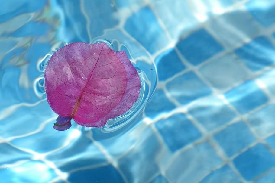 Cuánto tiempo deberíamos dejar en agua los esquejes de buganvilla en agua