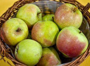 Cuánto tiempo suele tardar en salir un esqueje de manzano