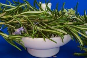 Datos importantes a tener en cuenta al momento detrasplantar romero - Ingrediente en comidas