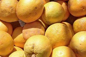Descripción delas enfermedades del mandarino - Sarna del naranjo dulce