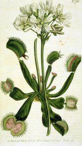 plantas carnívoras-3