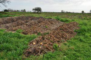 Es conveniente utilizar abono o compost