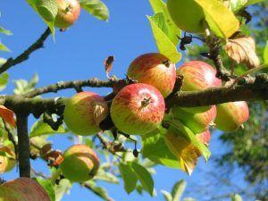 Riego del Manzano