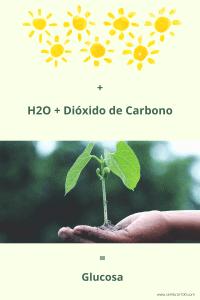 Fotosíntesis H2O + Dióxido de Carbono