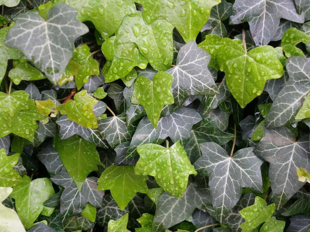 jardín vertical plantas