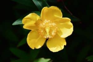 Las flores de Bach - Ejemplos
