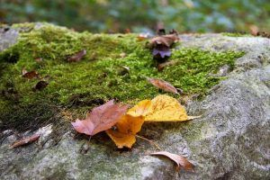 Manchas marrones en las hojas de las plantasManchas marrones en las hojas de las plantas
