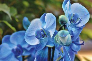 Cómo conseguir que los esquejes de orquídeas enraícen correctamente