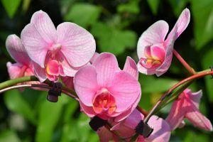 Riego de Orquídeas