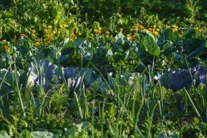 Paso 1. Elabora un listado de todo lo que quieres plantar en tu huerto