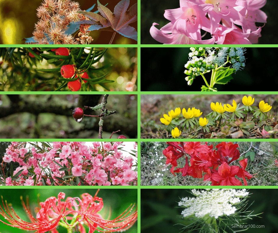 Plantas venenosas Sembrar100.com