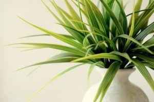 Riego de la Plantas de Interior