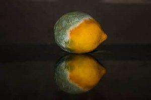 Podredumbre de los frutos
