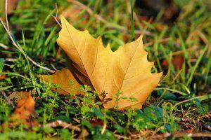 Qué hacer cuando se ponen marrones las hojas de las plantas