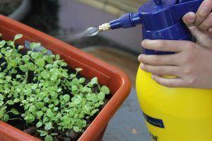 Qué son los pulverizadores de plantas